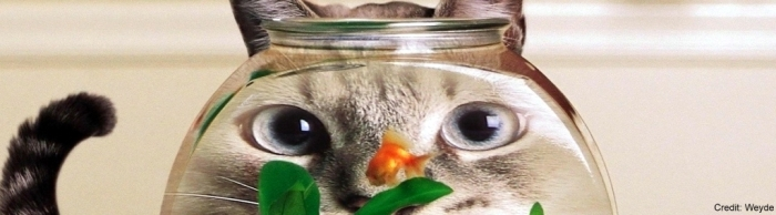 You might want to check the eyes of this goldfish.