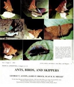 Photos of some skippers associated with army ants in Brazil. [From Austin et al. 1993. Credit: RJ Berth]