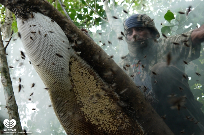 Many villagers make a living from gathering honey of wild bees in the Sundarbans. [credit: Daniela Biaggio]
